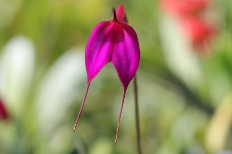 cuispes-flora-yumbilla