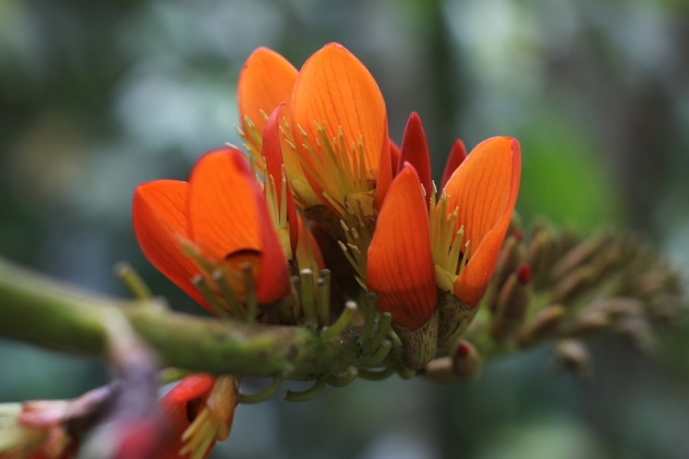 yumbilla-flora-forest
